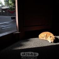 光影下的猫咪...