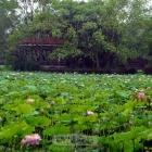 花开绿叶满池塘