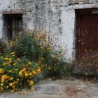 开在房前的野花