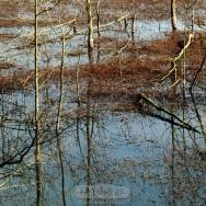 青龙湖湿地