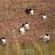 青龙湖的水鸟...