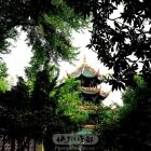 绿植中的望江楼
