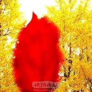 金秋黄红配