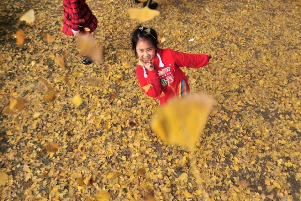 笑观银杏叶的小女by拍客古今摄影活动女孩_生快播作品清纯写真图片