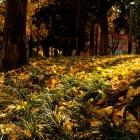 风吹叶落满地黄
