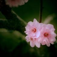 春暖花又开