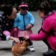 《爱猫咪》