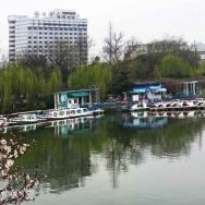 安徽合肥:春...