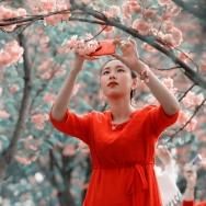 樱花的美丽