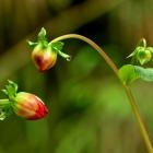 闺蜜私语---大荔菊