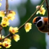 春天的小鸟