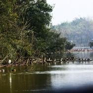 青龙湖游船观...
