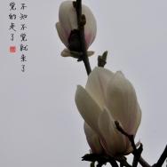 春天的使者